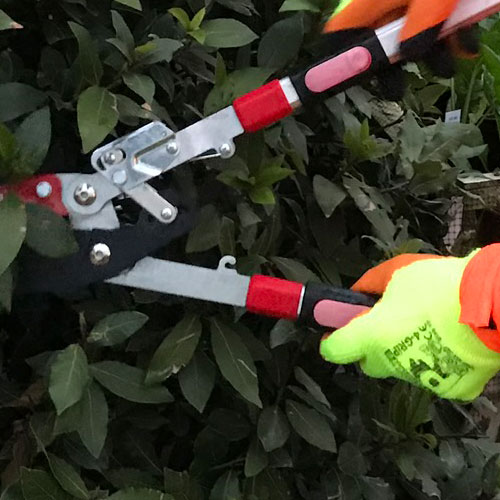 Hedge trimming with Winter Paws